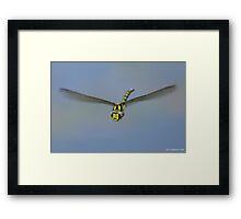 Flight Of The Dragonfly Framed Print