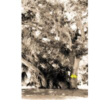 Yellow Ribbon Photographic Print