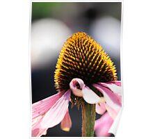 Aged Flower Poster