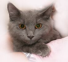 """""""Smokey"""" The Cat August 12 , 2009 by Corinne Noon"""