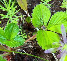 Garden Spider  by copperhead