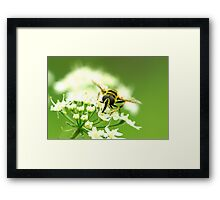 Insect Bee to Bee Framed Print