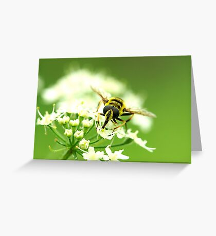Insect Bee to Bee Greeting Card