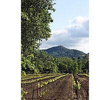 Yountville Vineyards Photographic Print