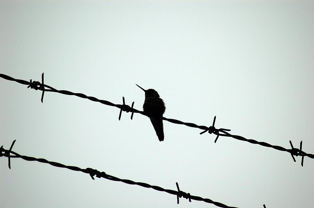 Bird on a Wire by tstreet