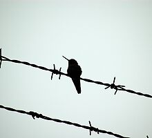 Bird on a Wire by tstreet
