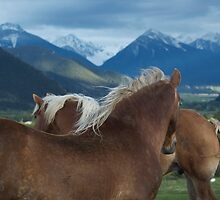 Manes & Mountains by UILFineArts