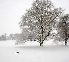 Oxfordshire In Snow by Stunningstills