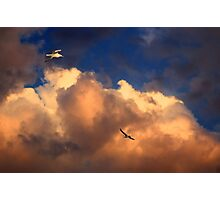 Seagulls at dusk Photographic Print