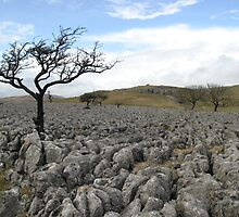 Limestone Pavement, Yorkshire Dales by Stunningstills