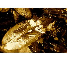 """""""Mussels&Barnacles"""" Photographic Print"""