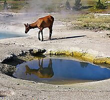 Visitor at West Thumb Geyser Basin, Yellowstone by Teresa Zieba