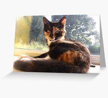 surprised kitten Greeting Card
