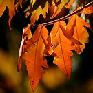 Changing Colors by Barb White