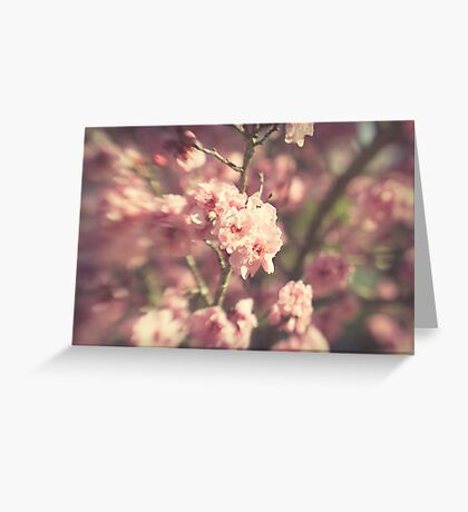 ~ the glitter of winter shines through a pale haze of spring ~ Greeting Card