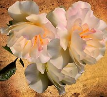 Spring Roses by Diane Schuster