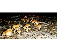 Mushroom Army  Photographic Print