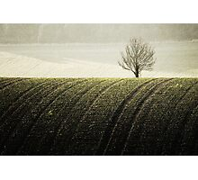 Rural Carpet Photographic Print