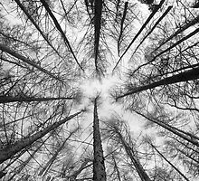 Tree Geometry by Stunningstills