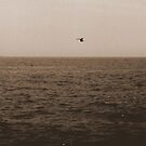 Open Sea Traveler by mooner1