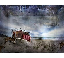 Last night tigers came Photographic Print