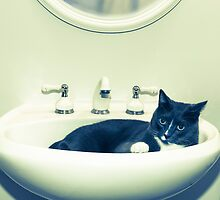 Cat in the Sink by susan stone