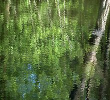 Tranquil Water Reflection by DMHImages