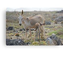 donkeys Metal Print