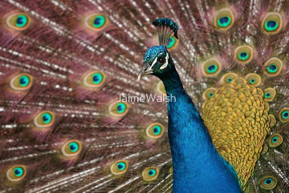 Peacock by JaimeWalsh