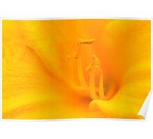 Macro Yellow Daylilly Poster