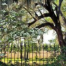 Southern Style by ©Dawne M. Dunton