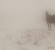 Horses in the mist by Vendla