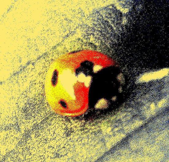 Ladybird on Leaf by Stan Owen