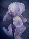 I Wish You Purple In The Spring by Diane Schuster