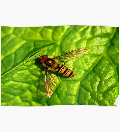 Golden Wings Poster