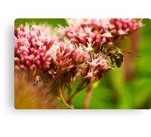 Nectar Collector Canvas Print