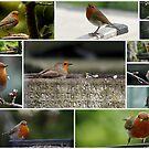 English Robin by AnnDixon
