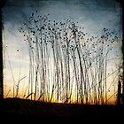 Forgotten flax at dawn by Michel Raj