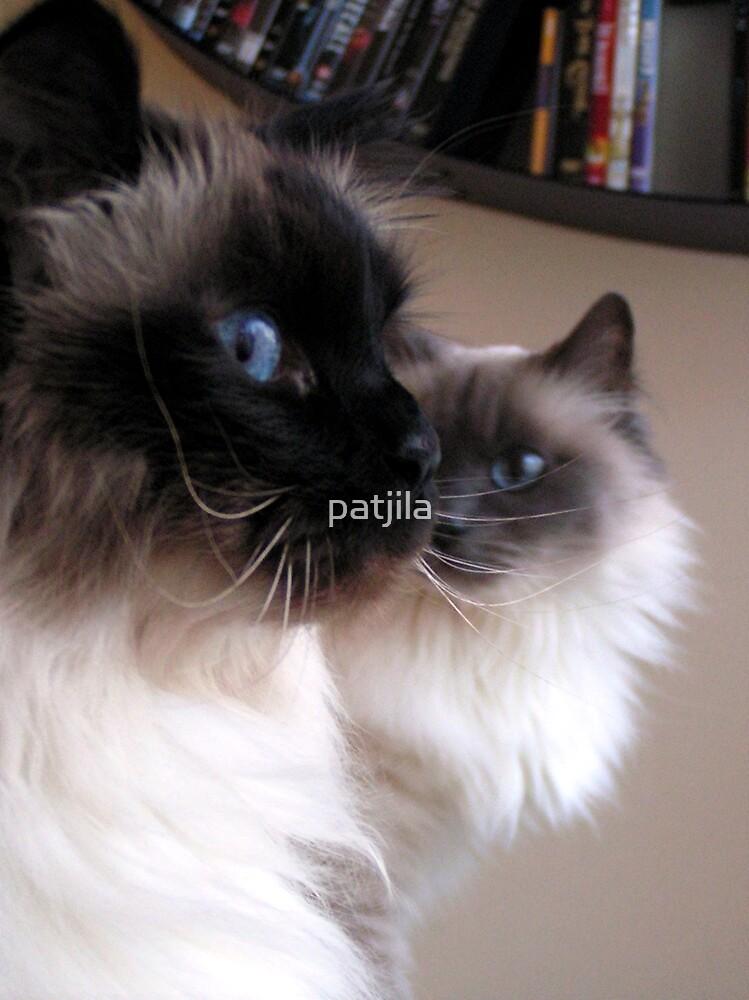 Gracious Birman cats Puk & Bibi by patjila