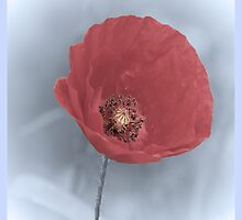 Poppy With Sympathy Card by simpsonvisuals