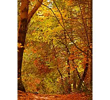 Autumn Bower Photographic Print