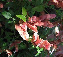 Shrimp Plant Solved  by Ginny Schmidt