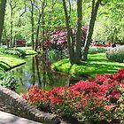 Keukenhof gardens by Elena Skvortsova