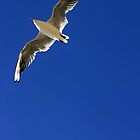 Gull by Wayne Gerard Trotman