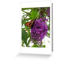 Papillon on Purple  Greeting Card