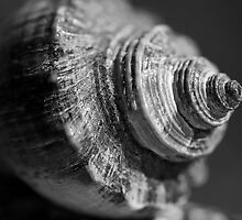 Macro sea shell by Dave Hare