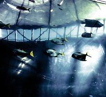 Fish & High Technology by Alexandra Muresan