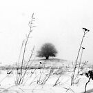 That Tree by Alexandra Muresan