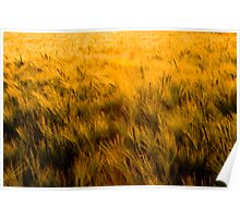 Among the Fields of Barley Poster