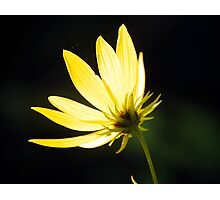 backlit Photographic Print